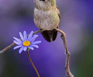 bird and flowers image