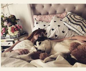 dog, bella thorne, and bed image