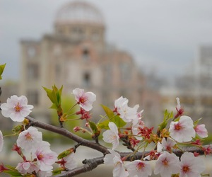 blossom, city, and flowers image
