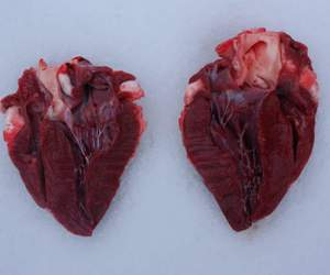 heart, grunge, and blood image