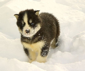 puppy and snow image