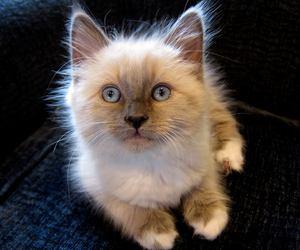 kitten, cat, and cute animals image