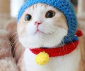 cat, animal, and doraemon image