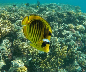 fish, Red Sea, and underwater image