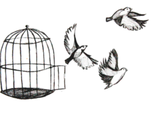 bird, free, and cage image