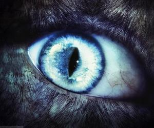 cat eyes image