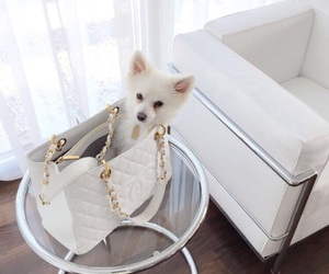 bag, chanel, and dog image