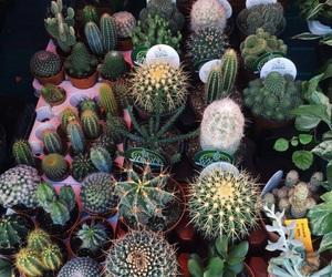 beautiful, cactus, and green image