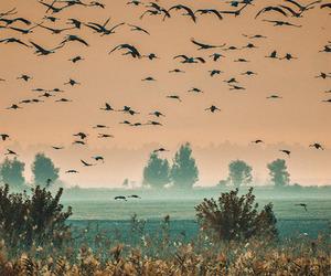 birds, landscape, and sunset image