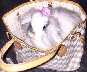 bag, beautiful, and bunny image