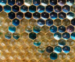 bee, blue, and beehive image