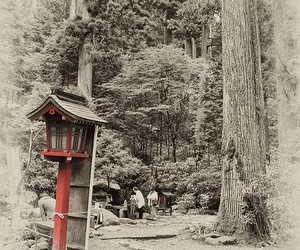 black white red, faux vintage, and forest image