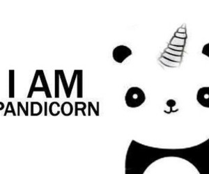 panda, unicorn, and pandicorn image