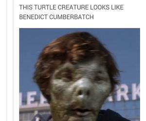 funny, tumblr, and tumblr post image