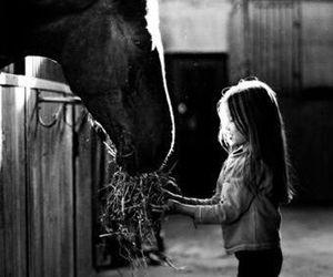 horse, love, and black and white image