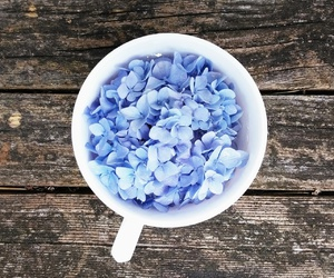 flowers, cup, and blue image