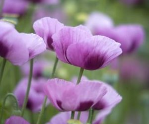 beautiful, purple flowers, and flowers image