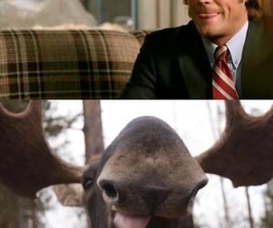 supernatural, moose, and sam winchester image