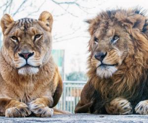 animal, beautiful, and king image