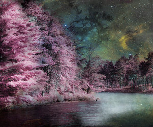 forest, magical, and pink image