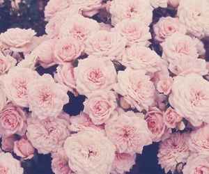 beautiful, flowers, and muted colors image