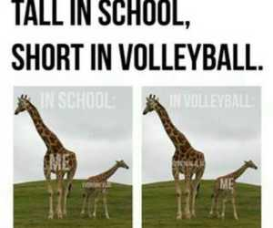 quotes and volleyball image