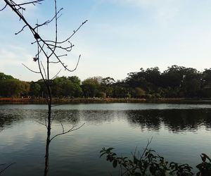 ibirapuera, tree, and lake image