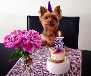 dog and birthday image