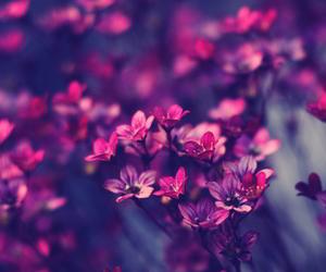 beautiful, flower, and purple image