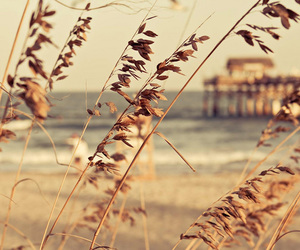 beach, inspiration, and photography image