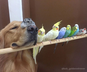 dog, animal, and bird image