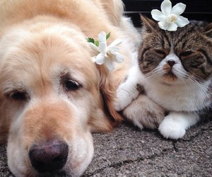 cat, dog, and flowers image