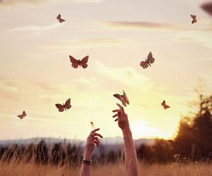 nature and butterfly image