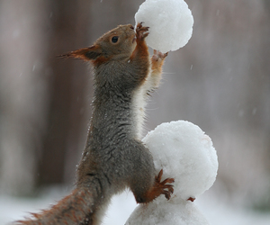 snow, squirrel, and animal image
