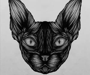 art, cat, and draw image