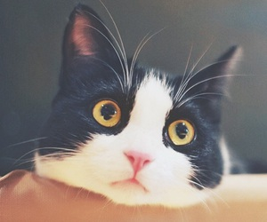 cat, lovely, and animal image