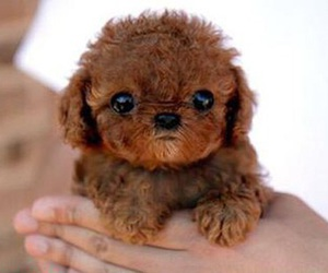 brown, puppy, and sweet image