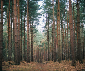 woods, tree, and forest image