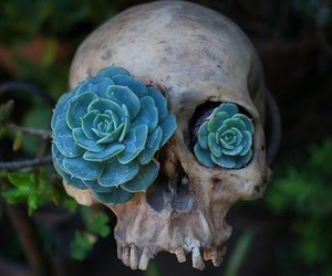 skull, flowers, and blue image