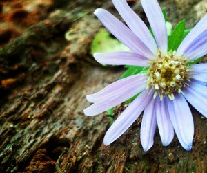 beauty, flower, and hiking image