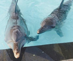 animals, beautiful, and dolphins image