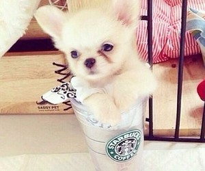 dog, starbucks, and sweet image