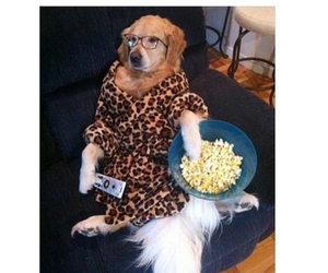 funny, dog, and party image