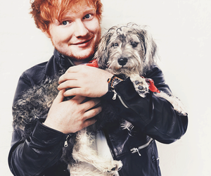 dog, ginger, and music image