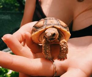 animal, vacation, and animals image