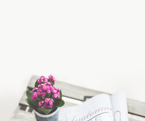 flowers, wallpaper, and coffee image