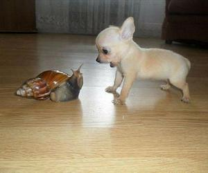 dog, puppy, and snail image