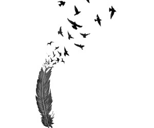 bird, feather, and overlay image