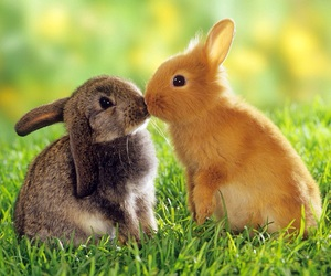 rabbit, animal, and bunny image
