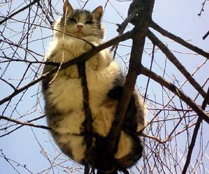 cat, tree, and kitten image